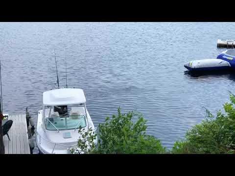 nouvel ordre mondial   Un OVNI sous-marin filmé dans le New Hampshire
