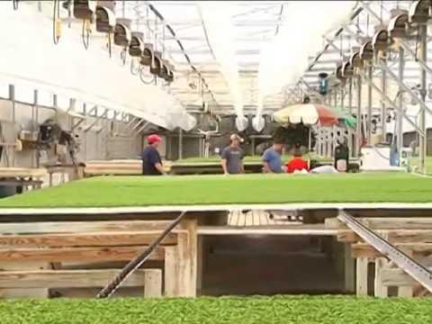 Công nghệ trồng rau sạch tại VN. www.thuycanhgwall.com