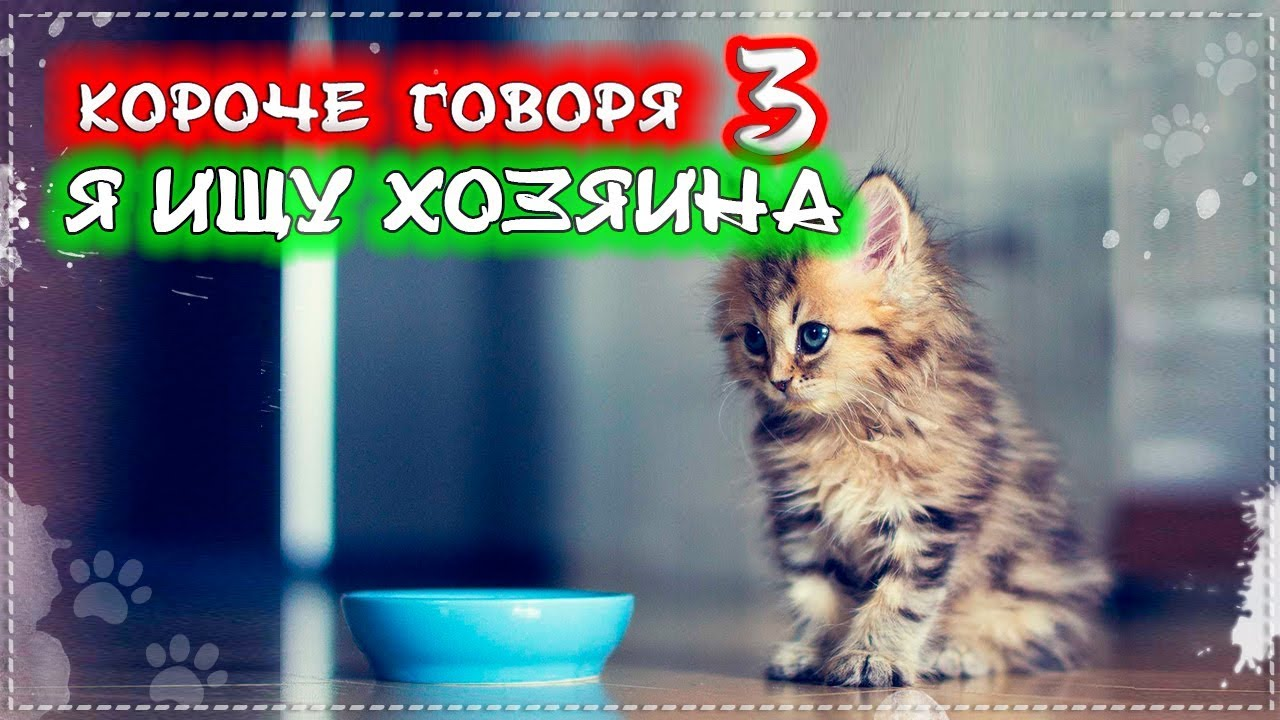 КОРОЧЕ ГОВОРЯ, Я ИЩУ ХОЗЯИНА [От первого лица] Я Бездомный котенок Лайки 3