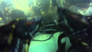3 Crawfish VS 3 Turtles