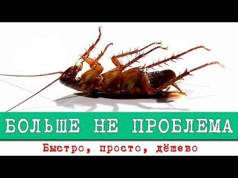 Как избавиться от тараканов. Лучший способ уничтожить. Барс (фипронил). Интересные факты о тараканах