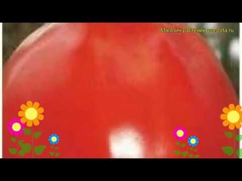Томат обыкновенный Мулен Руж. Краткий обзор, описание характеристик, где купить семена