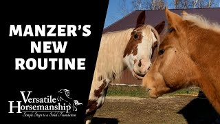 MANZER'S NEW ROUTINE // Versatile Horsemanship