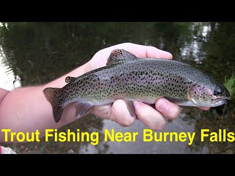 Trout Fishing Near Burney Falls