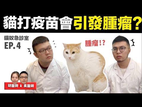 【貓打疫苗會引發腫瘤?】貓奴急診室EP.4 志銘與狸貓