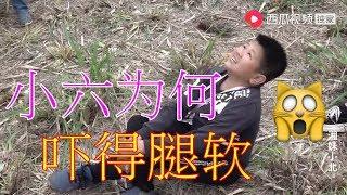 【湘妹小北】小北和秋子對小六做了啥,為何小六腿都嚇軟了 thumbnail