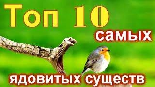 ТОП 10 самых ядовитых животных на Земле