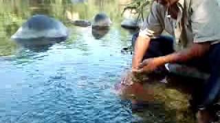 capturando peces zanatepec oaxaca