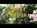 Полет гиббона - потрясающий аттракцион в Паттайе (Таиланд). 1001 Тур