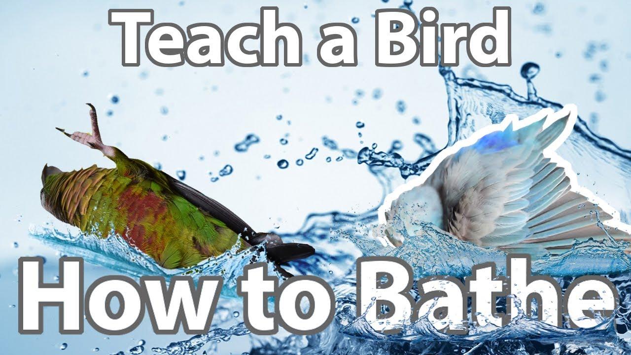 How To Encourage Birds to Bathe | Topics