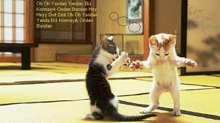 (Funny cat videos ) HOW to funny video kedi videosu izle kedi dansı izle komik kediler