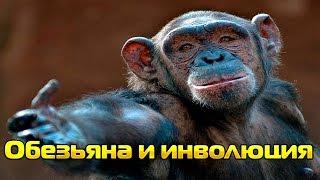 Как обезьяна произошла от человека( Инволюция обезьяны ФАКТЫ)