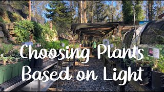 Choosing California Native Plants: Looking at the Light