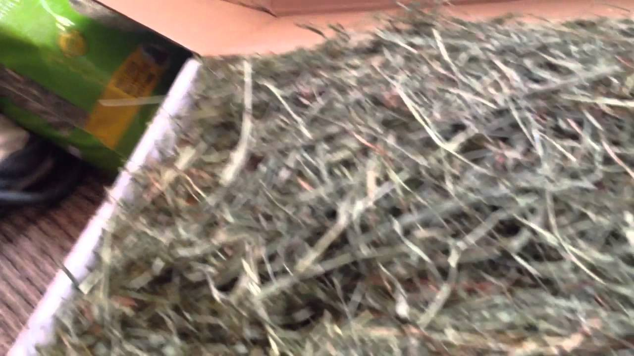 2nd Cut Timothy Hay Perfect Blend From Small Pet Select Youtube