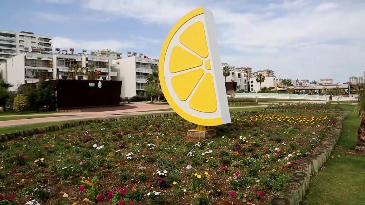Belediye 100 bin çiçek ve bitki üretiyor