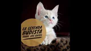 La leyenda budista sobre los gatos - Ciencia del Saber