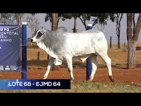 LOTE 68 - EJMD 64 - NELORE MOCHO