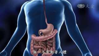 【發現】精華影片 - 20131228 - 人體奧秘系列 - 食物的分解廠 - 胃