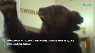 Медведь проехал на гироскутере по фойе Цирка Чинизелли