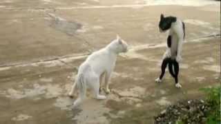 Harlem Shake Funny Cats