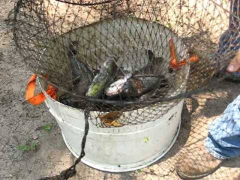 Catfish in a hoop net youtube for Hoop net fishing