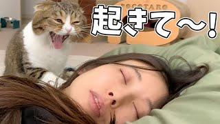 モンハンライズで寝落ちしたママVS絶対に起こす猫🐈