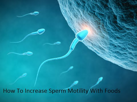 how-to-increase-sperm-motility-with-foods- ways-to-increase-sperm-count-&-sperm-motility-naturally