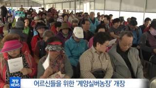 4월 3주 계양구정뉴스_어르신들을 위한 계양실버농장 개장 영상 썸네일