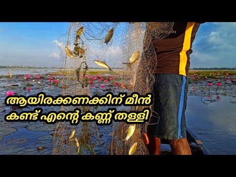 കായലിലെ വമ്പൻ  പരൽമീൻ വേട്ട | Heavy lake fishing