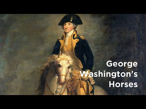 What Kind Of Horses Did George Washington Own?