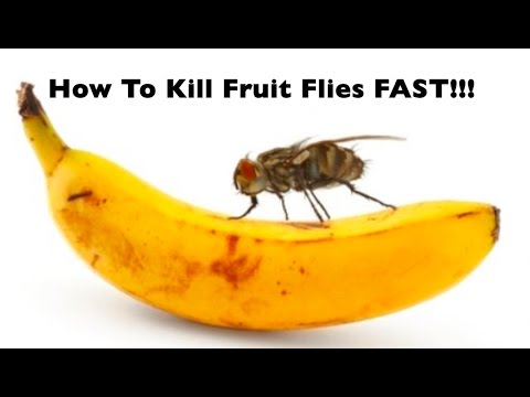 diy how to get rid of fruit flies gnats fast quickest easiest way to kill flies gnats. Black Bedroom Furniture Sets. Home Design Ideas