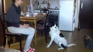 Igra Za Psa 11: Oponašanje