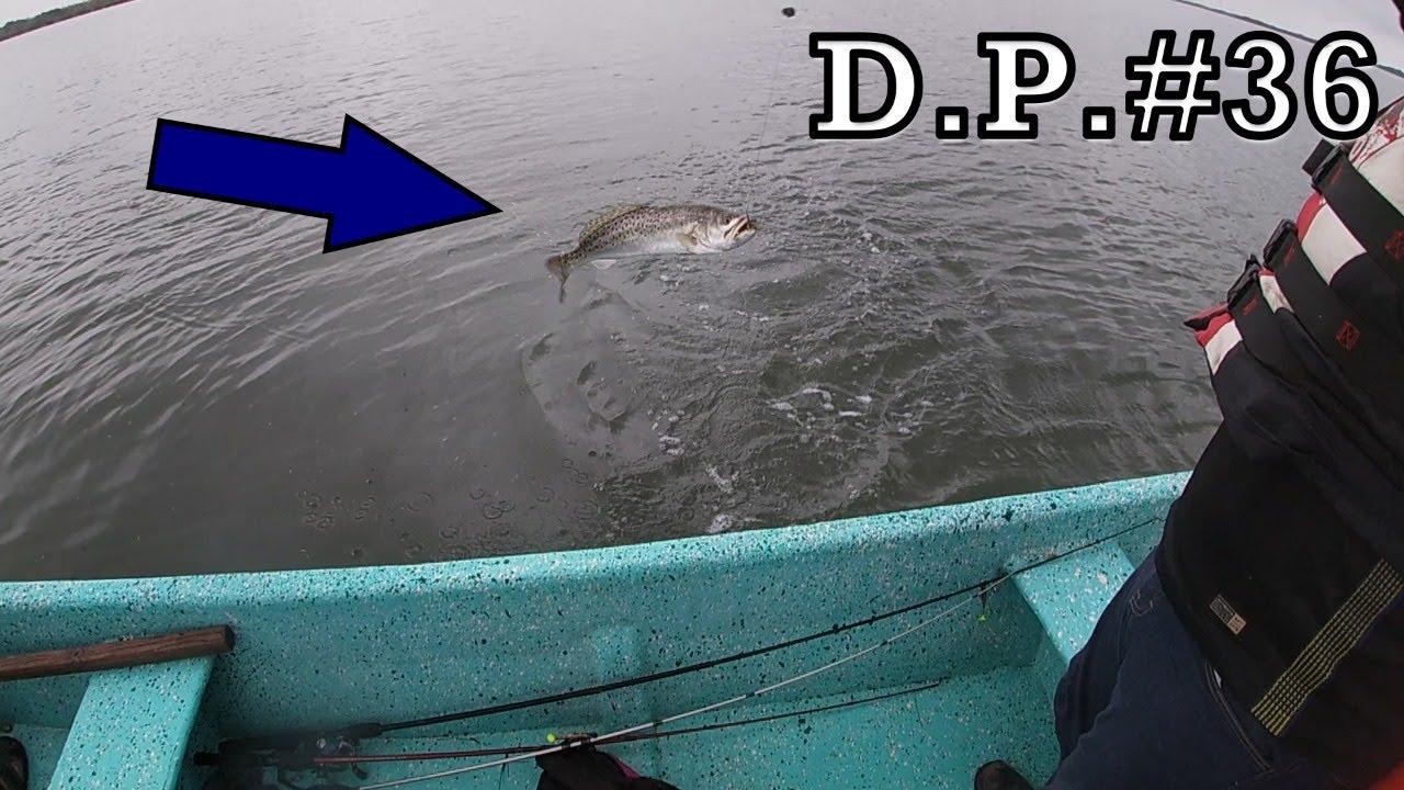 Pescando TRUCHAS con CAMARÓN VIVO