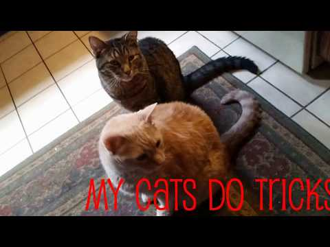 My Cats do Tricks - Another Llama Llibrary Production