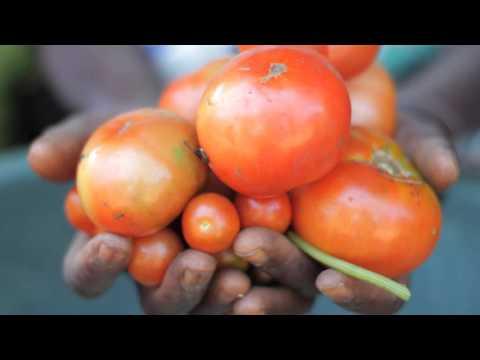 Vídeo Institucional de la FAO
