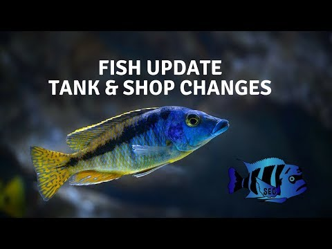 South East Cichlids Fish Update and Shop Changes