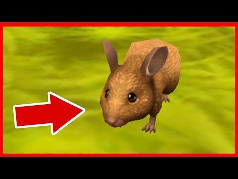 СИМУЛЯТОР МЫШИ ДИКАЯ ЖИЗНЬ в Mouse Sim