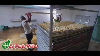 Extendido de la Piña en Bastidores, Proceso de Deshidratación en Juan Rodríguez Clara, Veracruz...