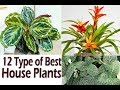 12 Best House Plants With Name . Grow & Enhance Your House Beauty