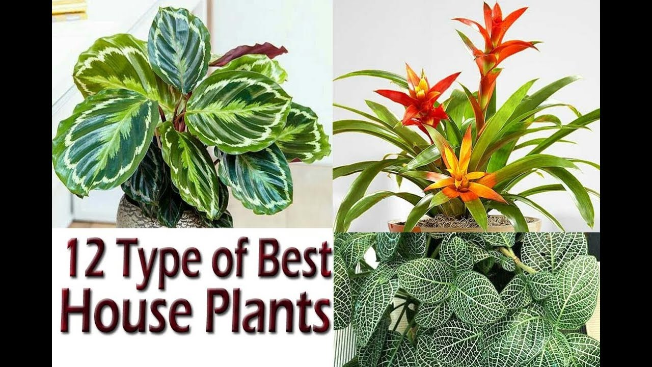 12 Best House Plants With Name . Grow & Enhance Your House Beauty Houseplants Pictures And Names on moon phases names, looney tunes characters names, weapon names,