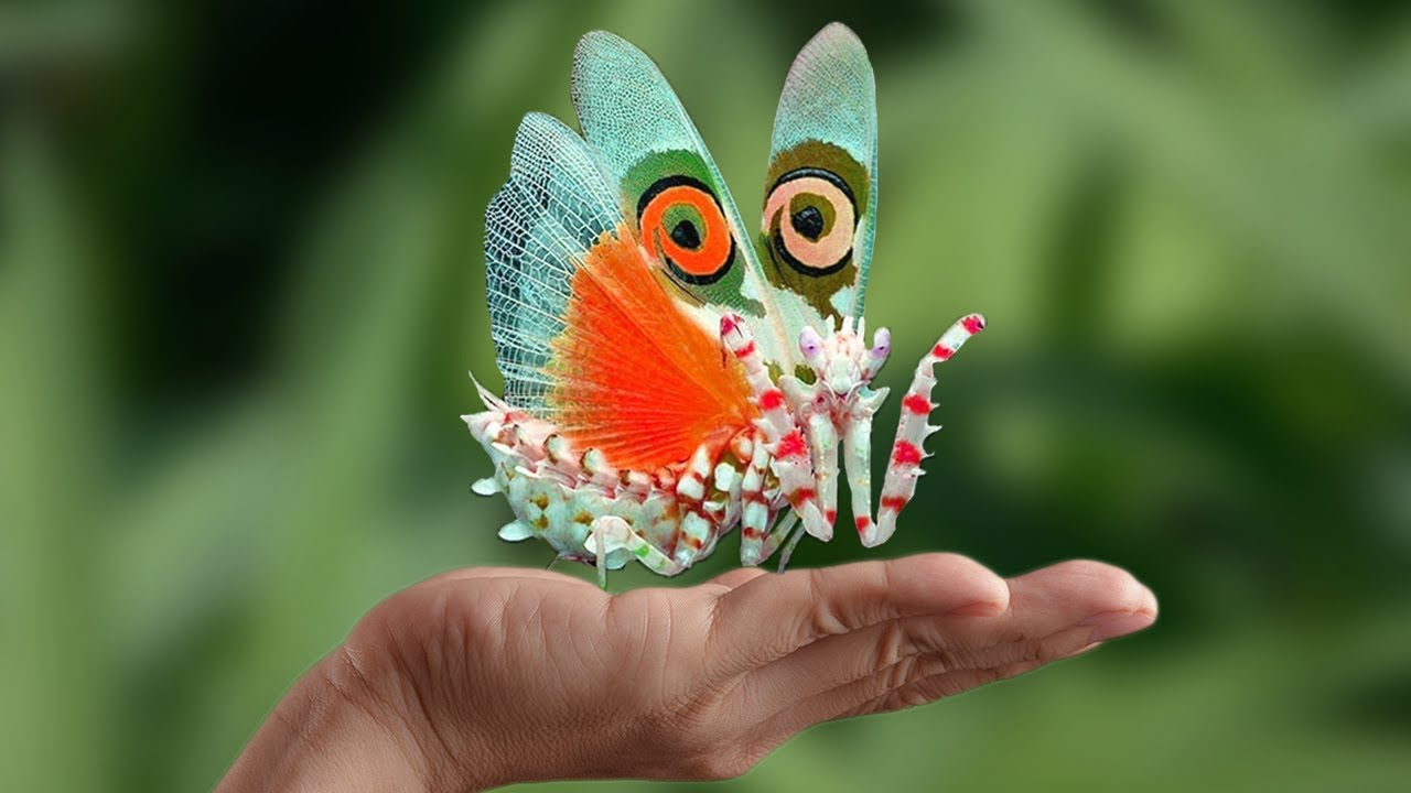 10 Beautiful Insects you can Keep as Pets