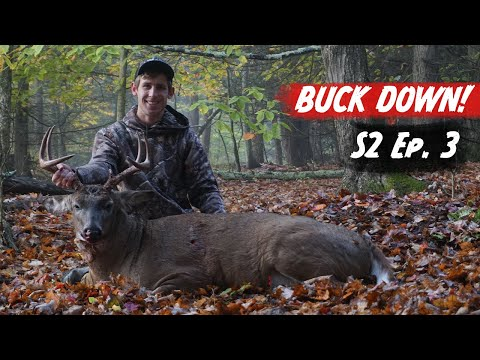 Rutting BUCK DOWN During A Cold Front! 20 Yard Shot! - PA Archery Hunting 2020