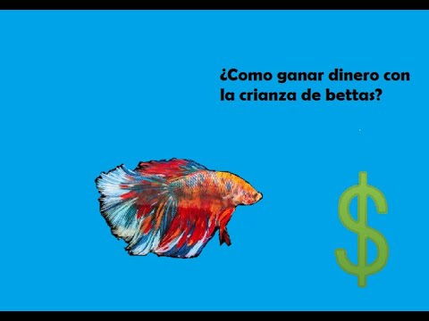 Bettas alimento para cr as doovi for Cria de peces ornamentales