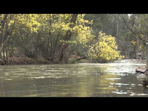 True Tales of the Trout Cod - Aboriginal History HD.wmv