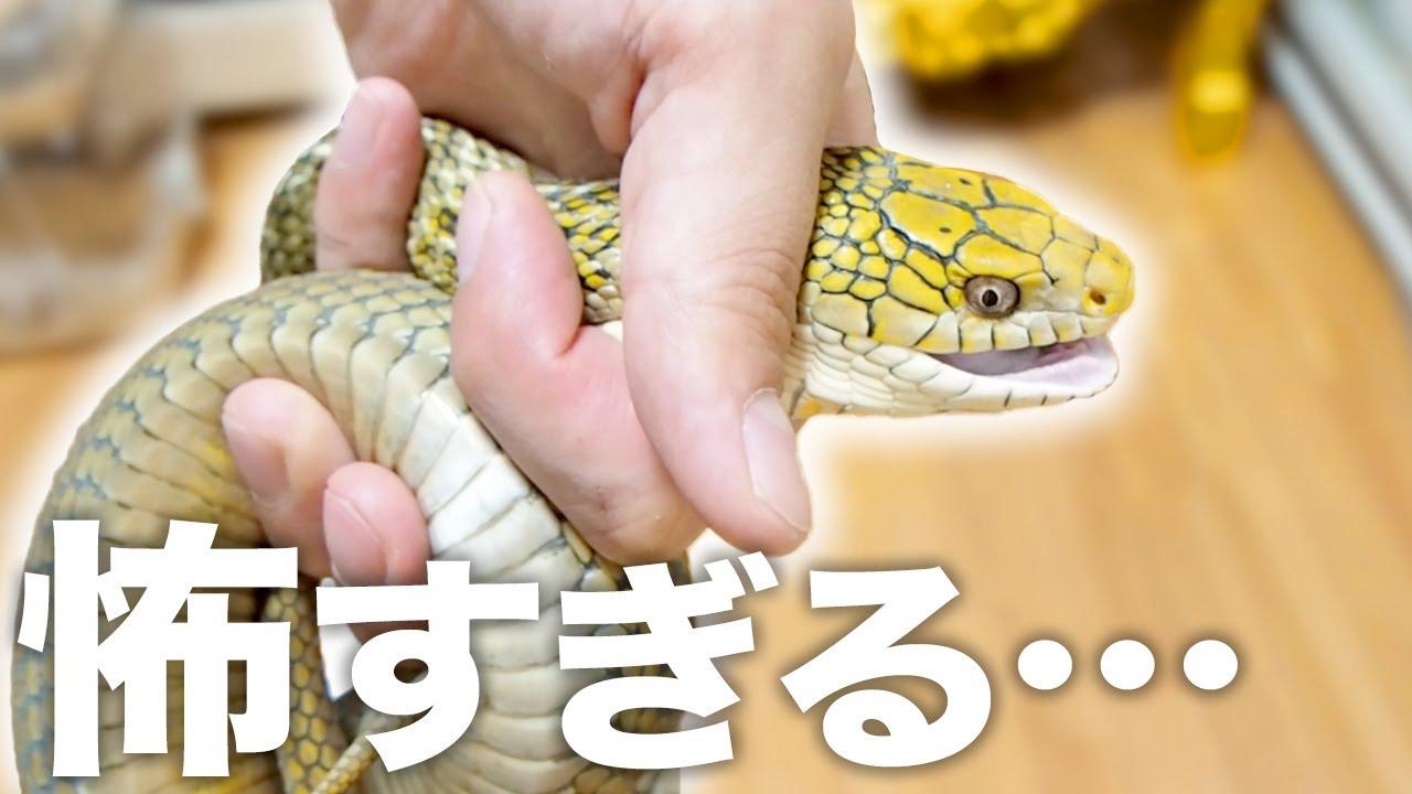 うちで1番の暴れん坊のヘビの世話が怖すぎる