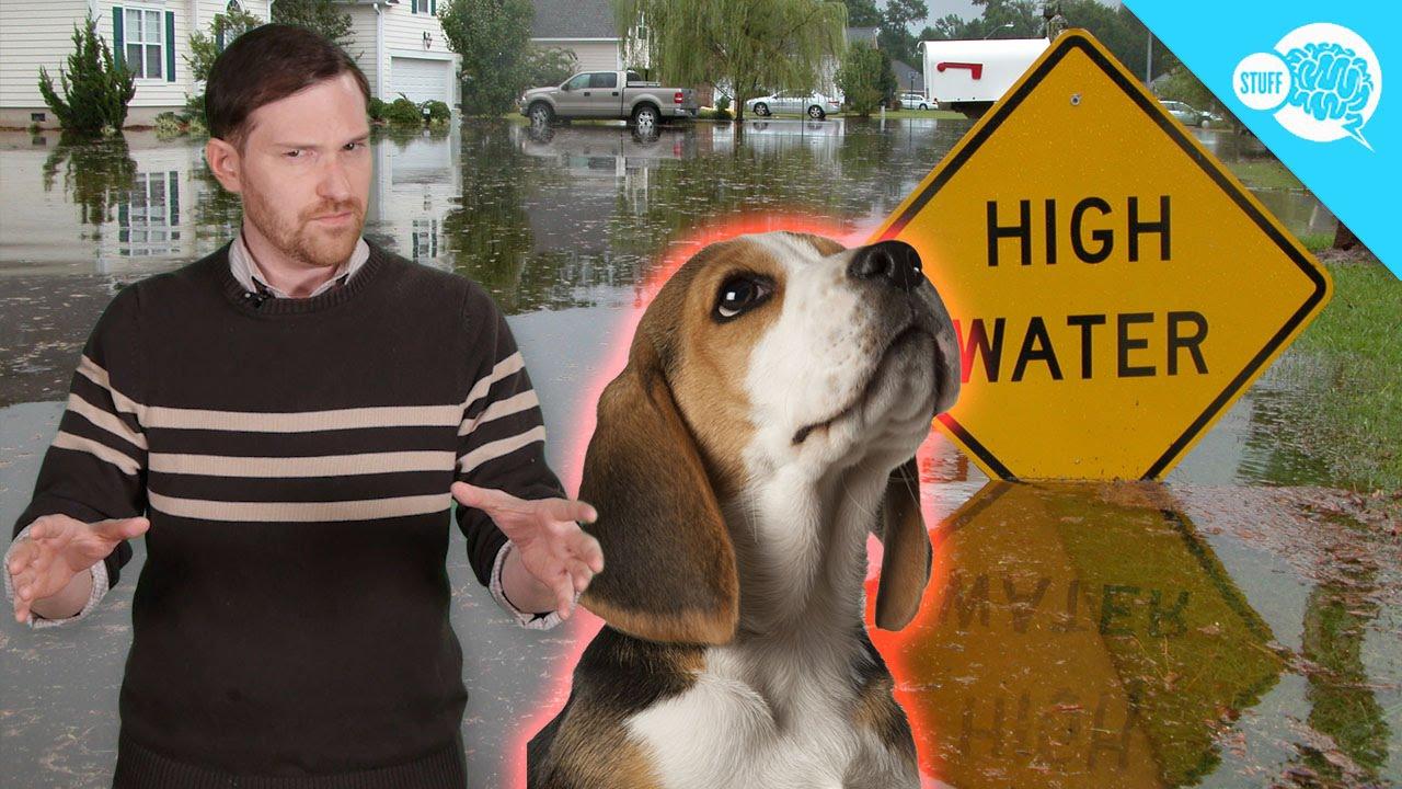 How Do Animals Sense Natural Disasters