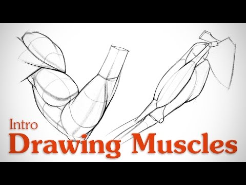 Drawing Muscles: What You Need to Know