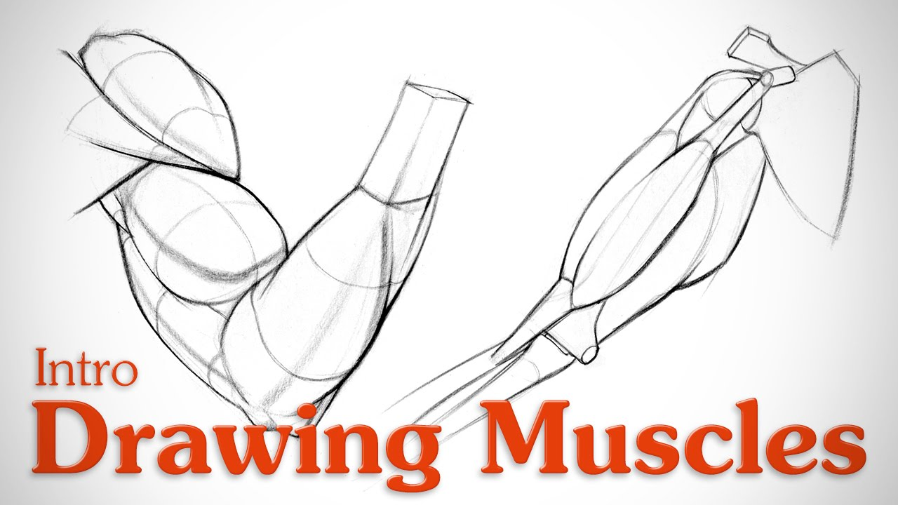 Drawing Muscles: What You Need to Know - YouTube