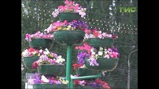 Расхитители цветочных клумб снова промышляют в Самаре