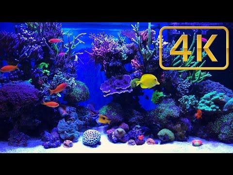 Schwings Reef Aquarium - 500l 4K